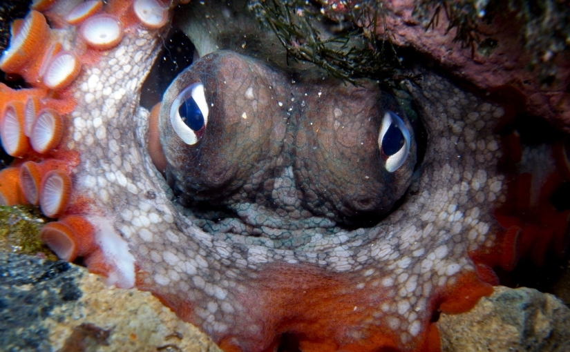The Octopus's Maw